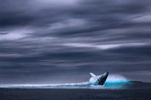 whale under the dark sky